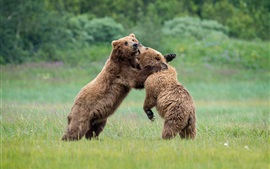 Preview wallpaper Playful two bears
