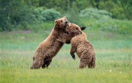 Verspielt zwei Bären