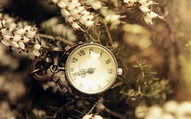 Preview wallpaper Pocket watch, flowers, retro style
