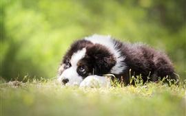 Preview wallpaper Puppy rest, grass, blurry