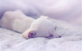 Preview wallpaper Puppy sleeping, comfort house