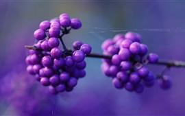 Purple berries, twigs