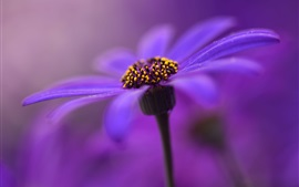 Purple flower, petals, stem