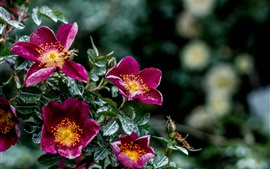 Fleurs pourpre, humidité, feuilles