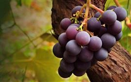 Uvas maduras púrpuras