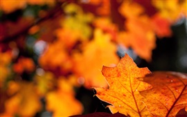 Preview wallpaper Red leaf, glare, blurry, autumn
