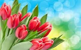 Tulipes rouges, feuilles vertes, bokeh