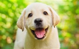 Sorriso Retriever