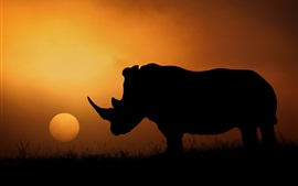 Preview wallpaper Rhino silhouette, Africa, sunset, evening