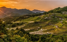 Campos de arroz, terraços, terras altas, cultivo, crepúsculo