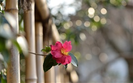 Preview wallpaper Rose out of fence, bokeh