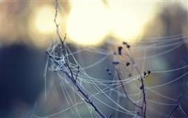 Spider web, morning, glare