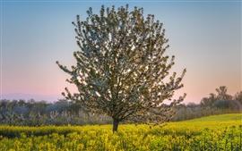 Preview wallpaper Spring, flowers tree, rapefileds