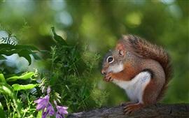 Esquilo, flores, folhas