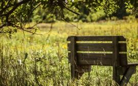 Лето, скамейка, трава
