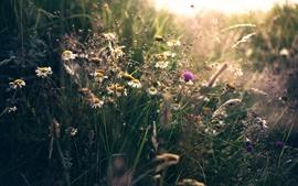 미리보기 배경 화면 여름, 야생화, 잔디, 햇빛