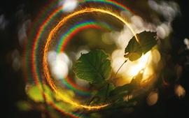 Halo de luz solar, folhas verdes, arco-íris