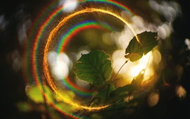 Sunlight halo, green leaves, rainbow