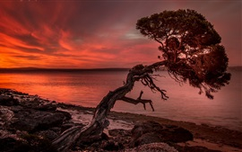 Sunset, lonely tree, sea
