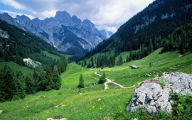 Swiss, mountains, trees, grass, road