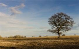 壁紙のプレビュー 木、畑、秋