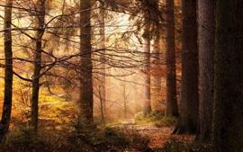 Árvores, floresta, luz solar, outono