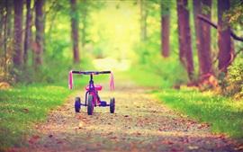 Arbres, sentier, bicyclette, bokeh