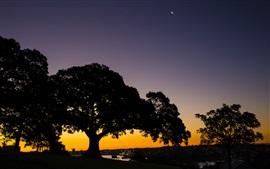 Trees, sunset, evening, river, docker