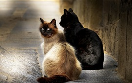 Preview wallpaper Two cats sit at street
