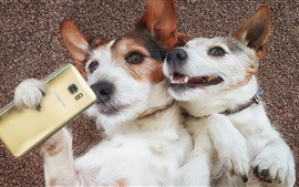 Preview wallpaper Two dogs, funny, use phone
