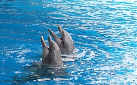 Preview wallpaper Two dolphins, out of water