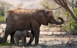 Dois elefantes, família