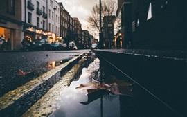Calle mojada, agua, hoja seca, ciudad