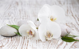 Preview wallpaper White orchid, pebbles, leaves