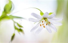 Белый цветок лепестков орхидей, тычинки, стебель