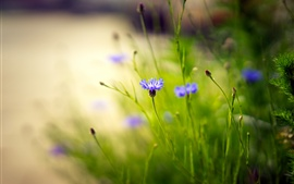 Preview wallpaper Wildflowers, blue flowers, grass, bokeh, nature