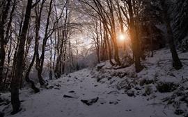 Aperçu fond d'écran Hiver, neige, montagne, arbres, rayons solaires, Bulgarie