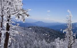 Invierno, árboles, nieve, montañas, vista superior