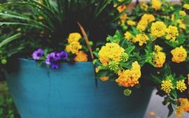 Flores amarelas, planta de casa