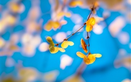 Preview wallpaper Yellow leaves, twigs, blue background, blurry