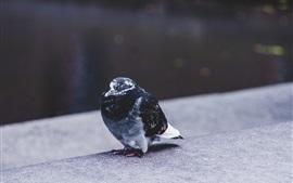 Uma pomba em pé no chão