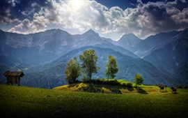 Austria, trees, mountains, grass, clouds, sunshine