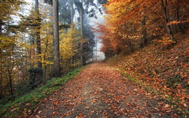 Preview wallpaper Autumn, path, leaves, fog