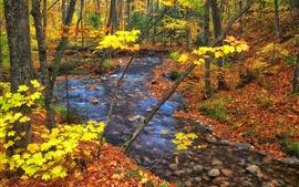 Осень, деревья, ручей, желтые листья, камни, Онтарио, Канада