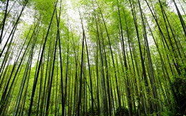 Preview wallpaper Bamboo forest, green, nature