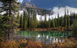 Banff National Park, lake, mountains, spruce, Canada