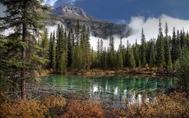 Национальный парк Банф, озеро, горы, ель, Канада