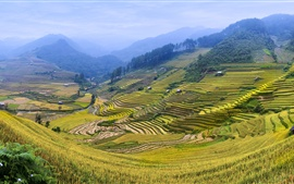 Beautiful countryside, hills, field, rice terraces, houses