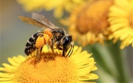 Vorschau des Hintergrundbilder Biene, gelbe Blumen