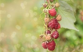 Preview wallpaper Berries, raspberry, branch, bokeh